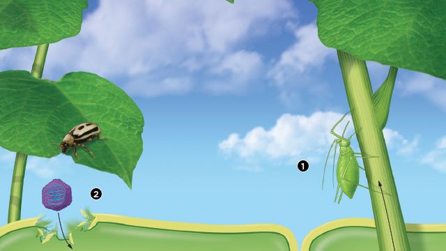 How Viruses Attack Plants